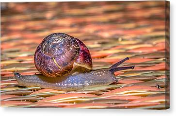 Canvas Print featuring the photograph Helix Aspersa by Rob Sellers