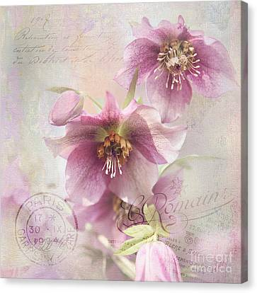 Canvas Print featuring the photograph Hellebore by Sylvia Cook