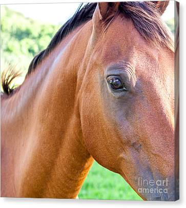 Canvas Print featuring the photograph Hello Beauty by Roselynne Broussard
