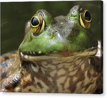 Hello Canvas Print by Bruce  Morrell