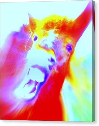 Hello Goodbye I Don't Know Why  Canvas Print by Hilde Widerberg