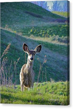 Hello Canvas Print by KD Johnson