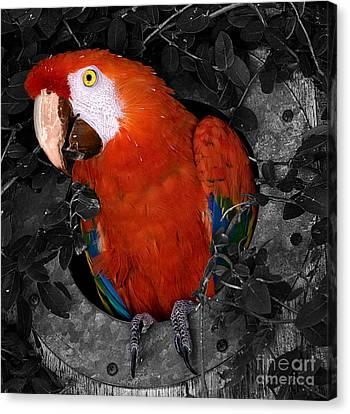 Hello Canvas Print by Robert Pilkington