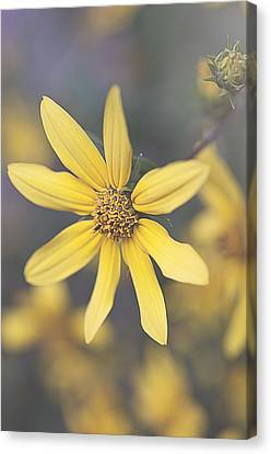 Hello Yellow Canvas Print by Faith Simbeck