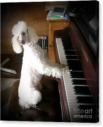 Henri Plays The Piano Canvas Print by Joyce Gebauer