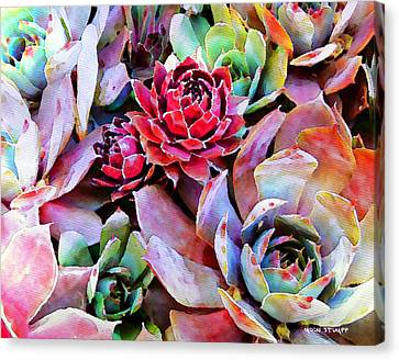 Hens And Chicks Series - Copper Tarnish  Canvas Print
