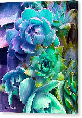 Hens And Chicks Series - Deck Blues Canvas Print