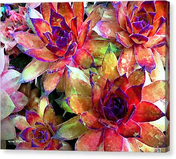 Hens And Chicks Series - Garden Brass Canvas Print by Moon Stumpp