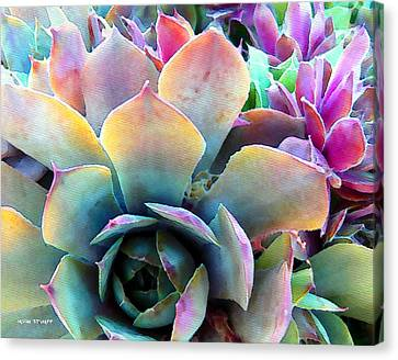 Hens And Chicks Series - Unfolding Canvas Print