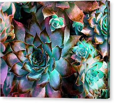 Hens And Chicks Series - Verdigris Canvas Print by Moon Stumpp