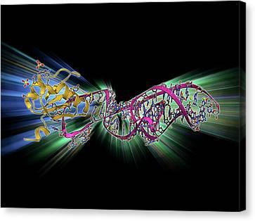 Hepatitis D Virus Ribozyme Complex Canvas Print by Laguna Design