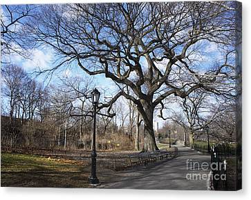 Canvas Print featuring the photograph Her Majesty The Tree by Rafael Quirindongo
