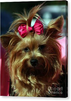 Her Pinkness Canvas Print by Steven  Digman
