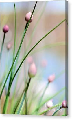 Herb Garden Canvas Print by Kim Fearheiley