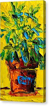 Interior Still Life Canvas Print - Herbal Plant Sage Tea by Patricia Awapara