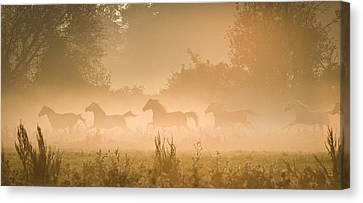 Break Fast Canvas Print - Herd In Light by Andy-Kim Moeller