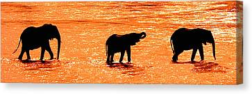 Herd Of African Elephants Loxodonta Canvas Print