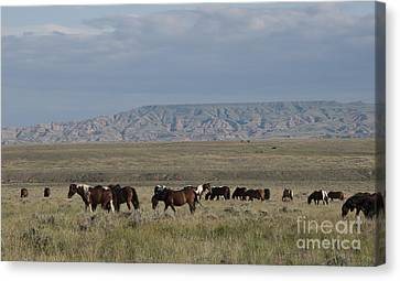 Herd Of Wild Horses Canvas Print by Juli Scalzi
