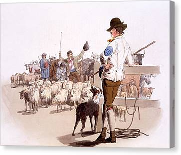 Herdsmen Of Sheep And Cattle, From The Canvas Print