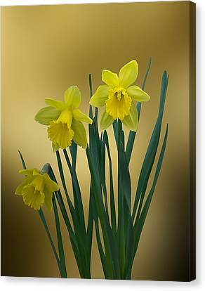 Canvas Print featuring the photograph Here Comes Spring... by Judy  Johnson