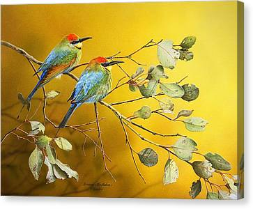 Here Comes The Sun - Rainbow Bee-eaters Canvas Print by Frances McMahon