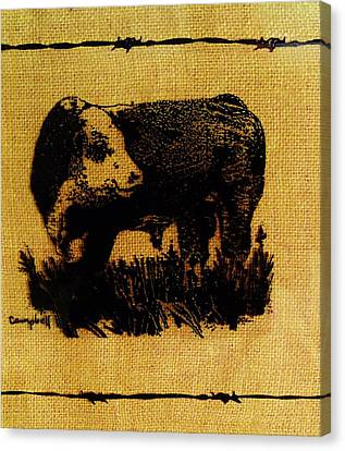 Polled Hereford Bull 12 Canvas Print by Larry Campbell