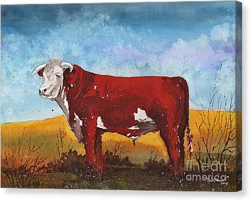 Hereford Bull Canvas Print by Tim Oliver