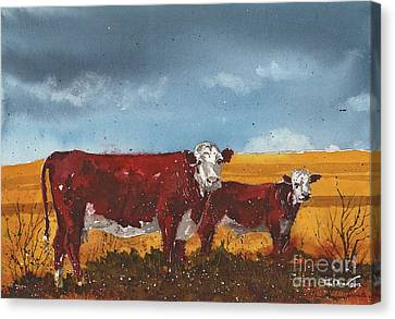 Hereford Cow And Calf Canvas Print by Tim Oliver
