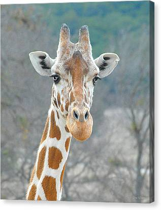 Here's Lookin' At You Canvas Print by Dyle   Warren