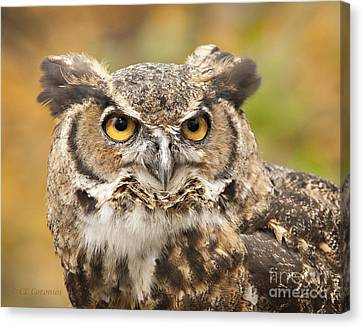 Canvas Print featuring the photograph Here's Looking At You by Carol Lynn Coronios