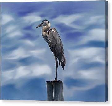 Heron 1 Canvas Print by Karen Sheltrown