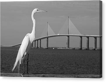 Canvas Print featuring the photograph Heron And Skyway by Daniel Woodrum