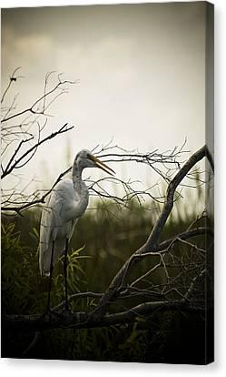 Heron At Dusk Canvas Print