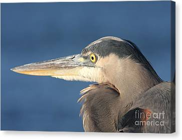 Canvas Print featuring the photograph Heron Close-up by Christiane Schulze Art And Photography