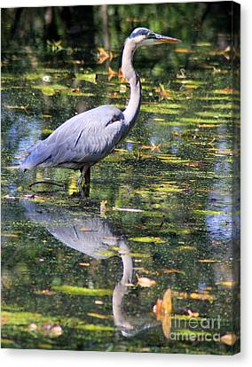 Canvas Print featuring the photograph Heron Hunter by Kenny Glotfelty