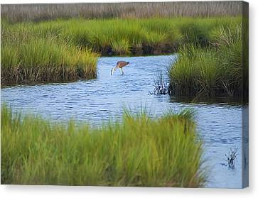 Heron In A Salt Marsh Canvas Print
