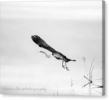 Heron In Black And White 2 Canvas Print by Bruce A Lee
