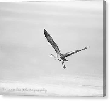 Heron In Black And White Canvas Print by Bruce A Lee