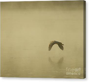 Canvas Print featuring the photograph Heron In Flight  by Christopher Mace