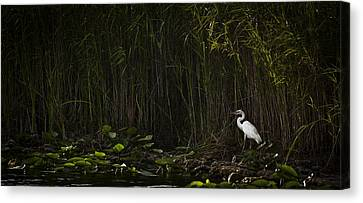 Heron In Grass Canvas Print