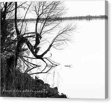 Heron In Tree Canvas Print by Bruce A Lee