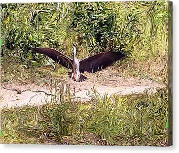 Heron Landing Canvas Print by Carolyn Reinhart