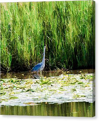 Canvas Print featuring the photograph Heron by Leif Sohlman