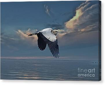 Heron Night Flight  Canvas Print