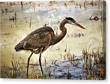 Heron On A Cloudy Day Canvas Print by Marty Koch