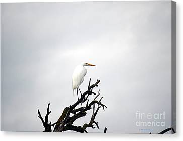 Heron On A Dead Tree Canvas Print