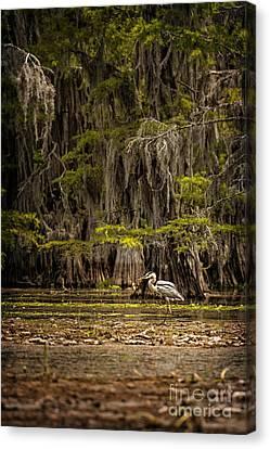Heron On Caddo Lake II Canvas Print