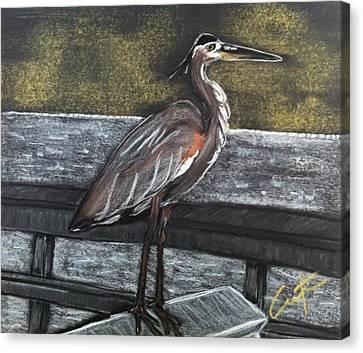 Heron On Hunting Island Fishing Dock Canvas Print
