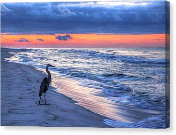 Heron On Mobile Beach Canvas Print