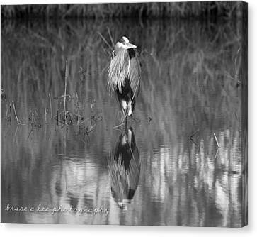 Heron Reflection Canvas Print by Bruce A Lee